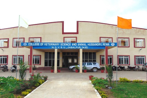 Veterinary College Rewa